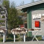 Ab der Troms gibt es Regelmäßig Rentiere und auch Shops für Felle