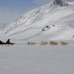 Mit den Hunden durchs Eis
